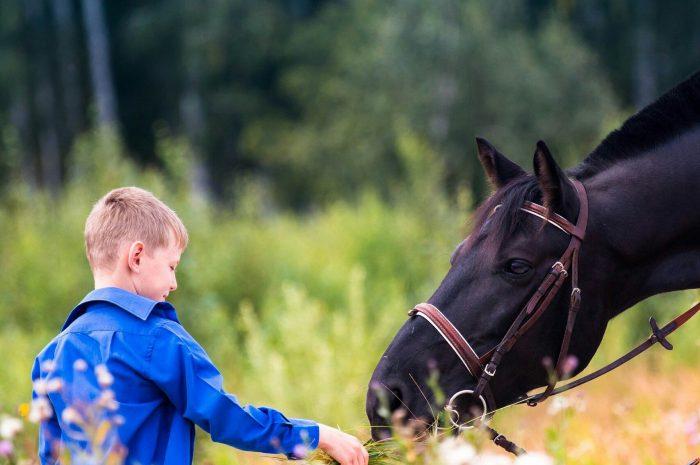 Автономная некоммерческая организация Центр иппотерапии и адаптивной верховой езды «Добрая лошадка»